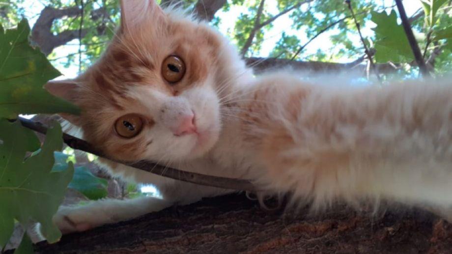 Hoy saludamos a Ramona, que disfruta del solcito entre los árboles.-