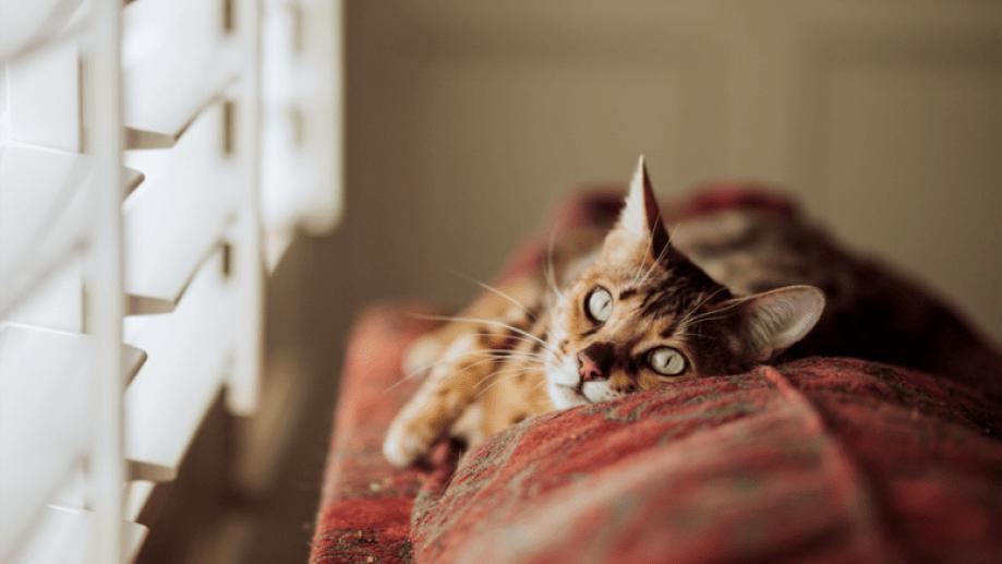 Las temperaturas empiezan a bajar de a poco, y salir de la cama para arrancar el día es un trabajo complicado.-