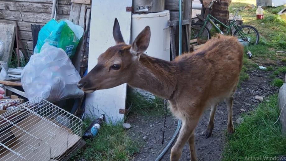 La familia encontró al ciervo en una zona del Brazo Huemul. Foto: gentileza