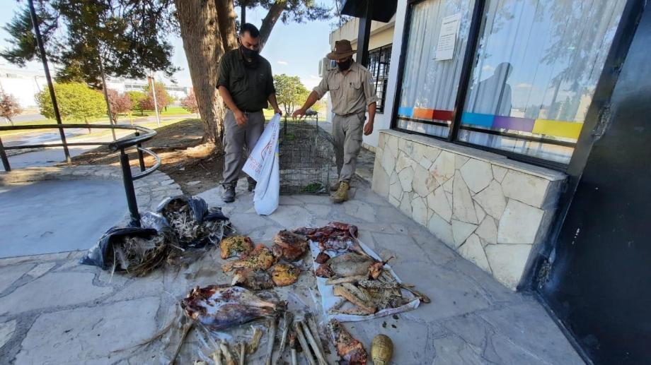 Los restos de carne que fueron secuestrados. Foto: Guardafaunas Neuquén
