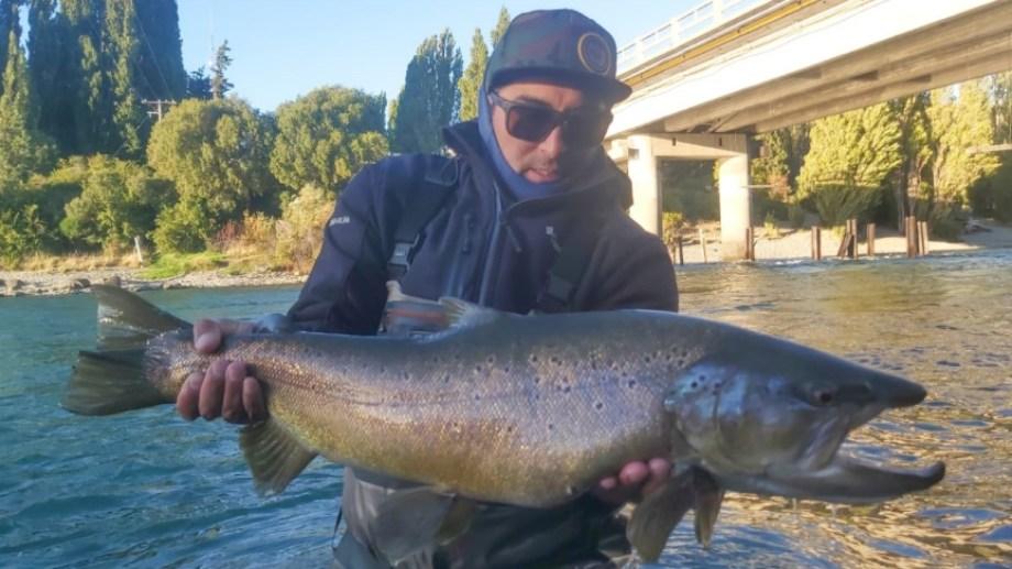 """El domingo pasado, cerca del puente, Diego """"Chino Valdebenito pescó esta fenomenal trucha marrón en el Limay Superior."""