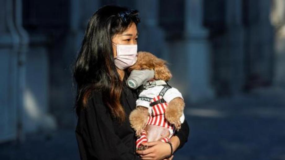 Rusia aprobó la primera vacuna contra el coronavirus para animales.
