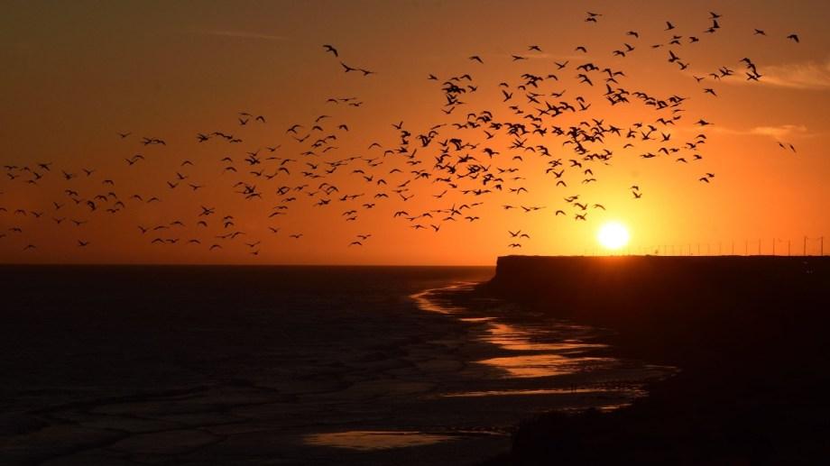Acantilados, loros y atardecer. Y el cielo que a lo lejos se funde con el mar. Foto: Alejandro Carnevale.