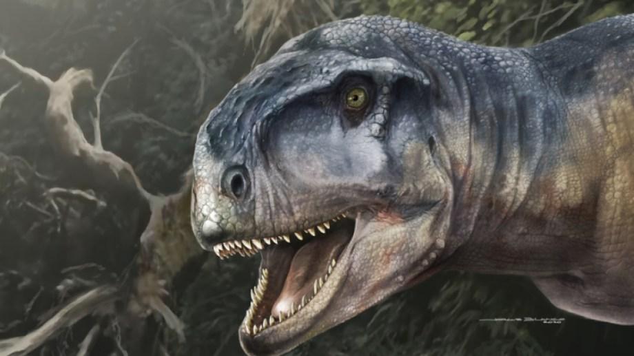 La nueva especie de dinosaurio se llama Llukalkan aliocranianus.Los científicos del Conicet y de la Universidad Nacional del Comahue le pusieron ese nombre porque la primera palabra es un vocablo mapuche que significa el que asusta o causa temor. La segunda palabra en latín hace referencia a un cráneo distinto. Crédito: Jorge Blanco