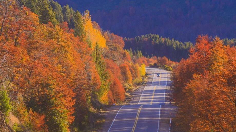 La ruta 40 en otoño. Foto: Patricio Rodríguez.