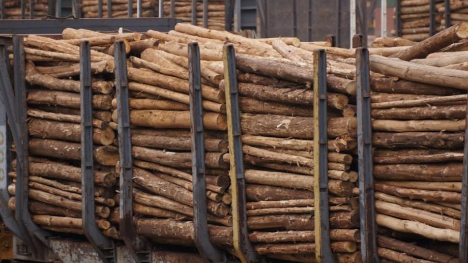 Deforestación.  Las Naciones Unidas han reconocido que la degradación ambiental afecta principalmente las mujeres, cuya salud es más frágil durante el embarazo y la maternidad