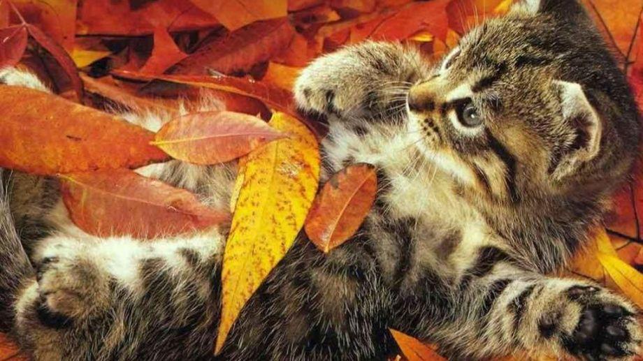 ¿Estás listo para atravesar el otoño o todavía no pudiste salir de tu cama?.-