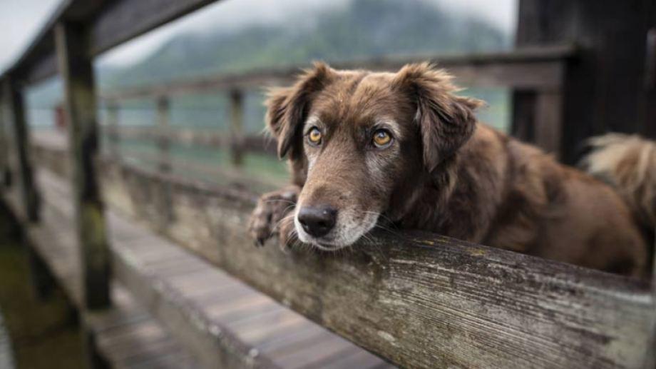 A pesar de la baja de temperaturas, el día acompaña para salir a pasear con la mascota.-