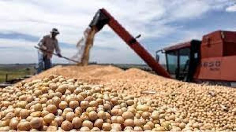 El precio de la soja superó los 600 dólares por tonelada.
