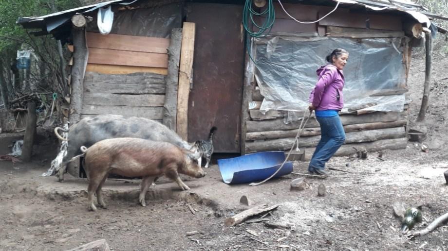 En abril, el Inai reconoció la ocupación de la comunidad mapuche José Celestino Quijada en unas 300 hectáreas de la ladera sur del cerro Otto. Foto: gentileza