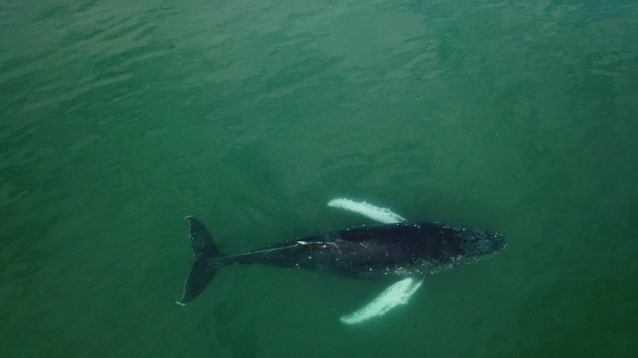 La ballena ya nada en aguas seguras. (Foto: gentileza Candela Fernández)