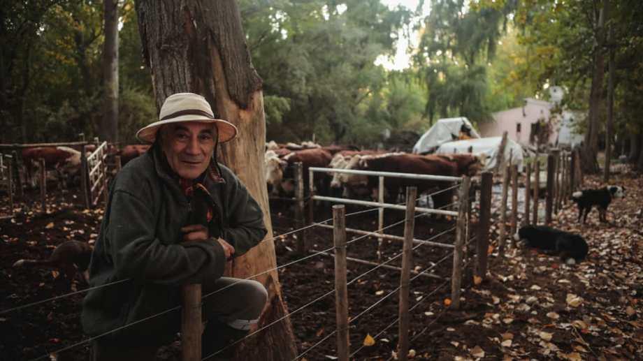 Todas las mañanas, acompañado por sus perros, suelta a las vacas. Foto: Gastón Fournier.