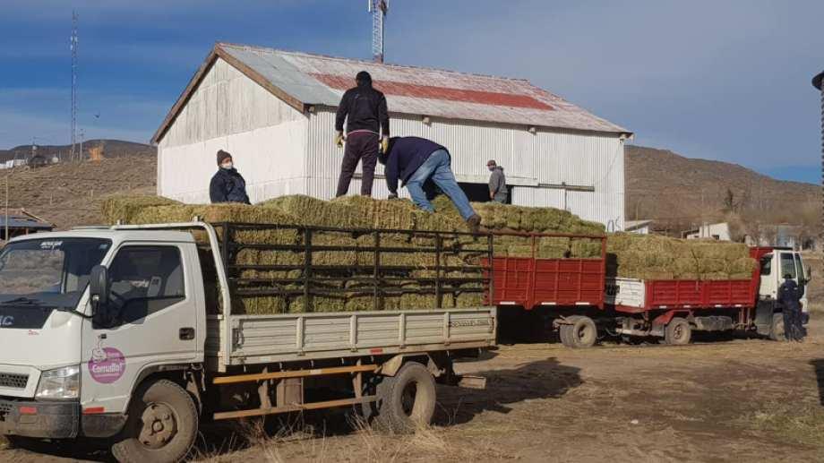 En Comallo se constituyó uno de los primeros bancos de forraje. Durante el invierno pasado la distribución de pasto y maíz fue vital. Foto: gentileza.