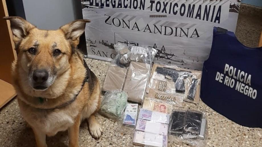 """El Perro """"July"""" detectó los estupefacientes. Foto: gentileza"""