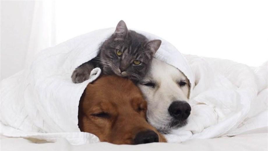 Hoy dan ganas de pasar el feriado metidos en la cama.-