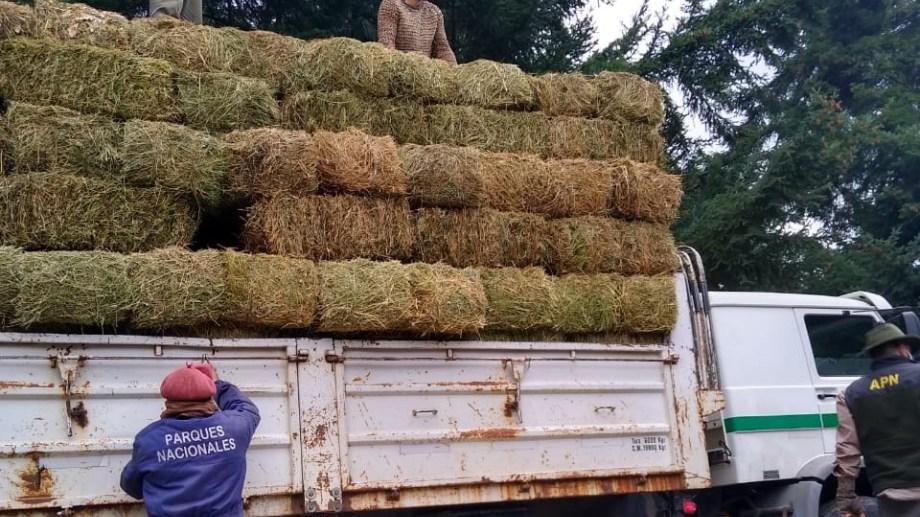 Esta mañana trasladaron unos 200 forrajes desde Picún Leufú hasta La Angostura. Foto: gentileza