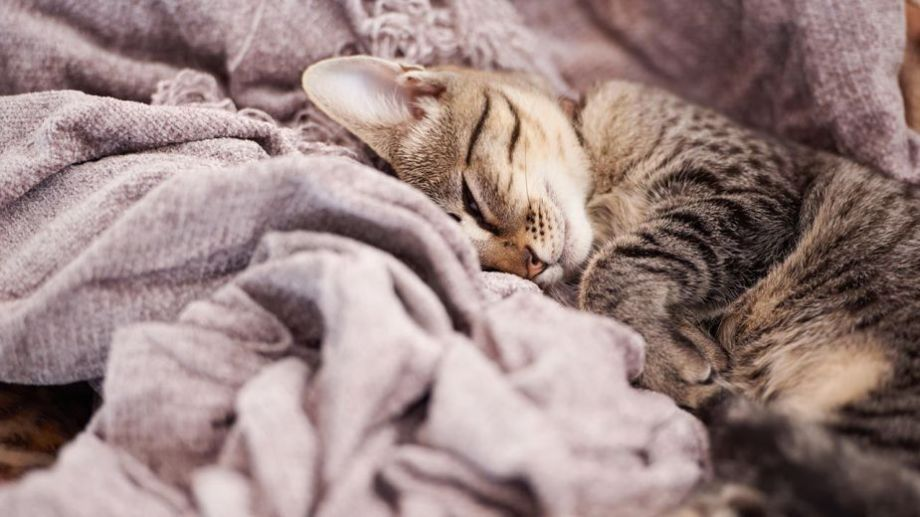 Los días helados como hoy dan ganas de quedarse en casa, tapaditos hasta la nariz.-