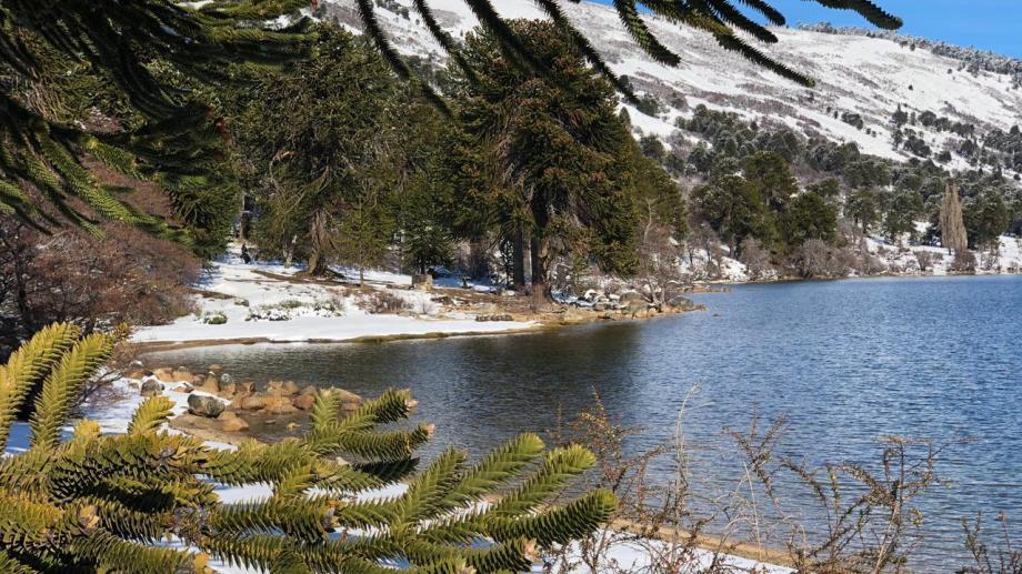 Ruca Choroy se encuentra al oeste de Aluminé, dentro de la zona norte del Parque Nacional Lanín, y recorre un total de 25 kilómetros. (archivo)