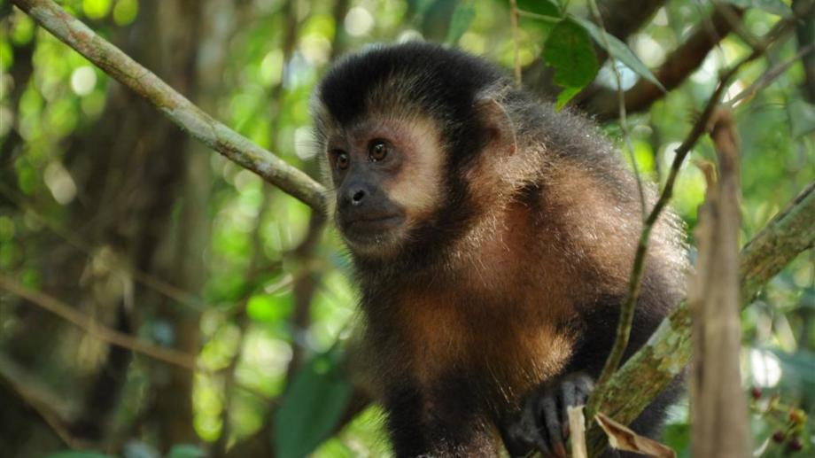 Fauna nativa. En Misiones, la deforestación pone en peligro a los animales