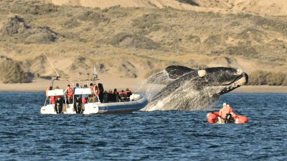 Piruetas gigantes a metros de las embarcaciones y cerca de la costa. Foto: Maxi Jonas
