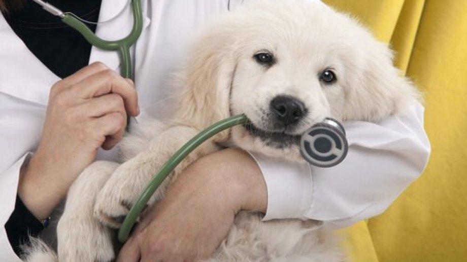 Los problemas en los sacos anales se suelen dar en los perros y muy rara vez en los gatos. (Gentileza).-