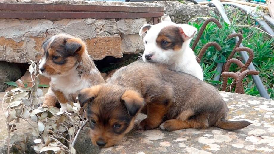 El abandono de crías y el maltrato animal, no ha disminuido
