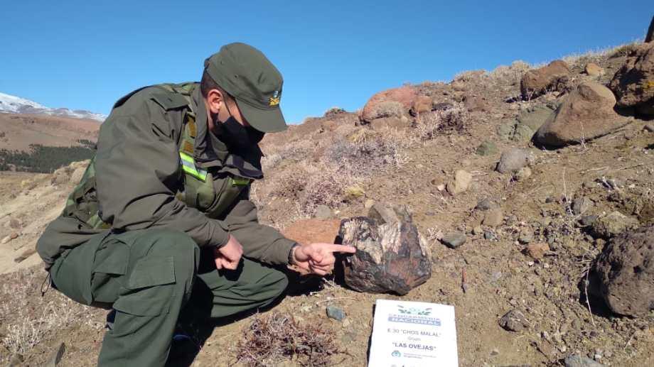 Los troncos petrificados del norte neuquino. Foto: Prensa Gendarmería