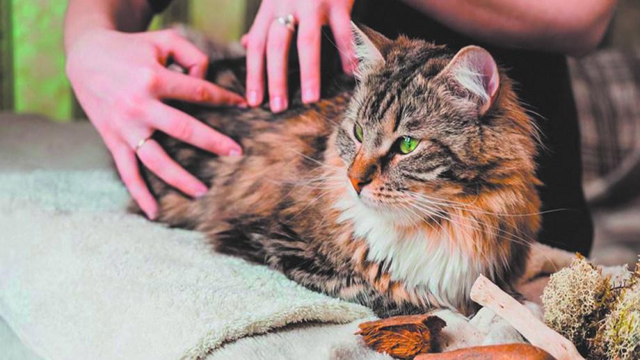 La fisioterapia en animales los beneficia notablemente