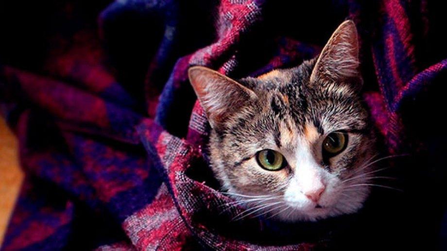 Dan ganas de quedarse abajo de las mantas, y disfrutar el frío.-