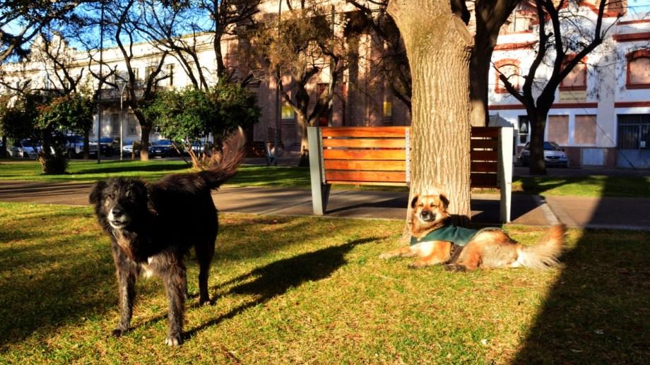 En Viedma, varios perros viven en la plaza del centro. Le dan de comer los comerciantes de la zona.
