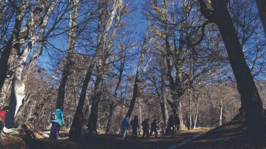 Entre las actividades hay una caminata. Fotos: Alfredo Leiva.