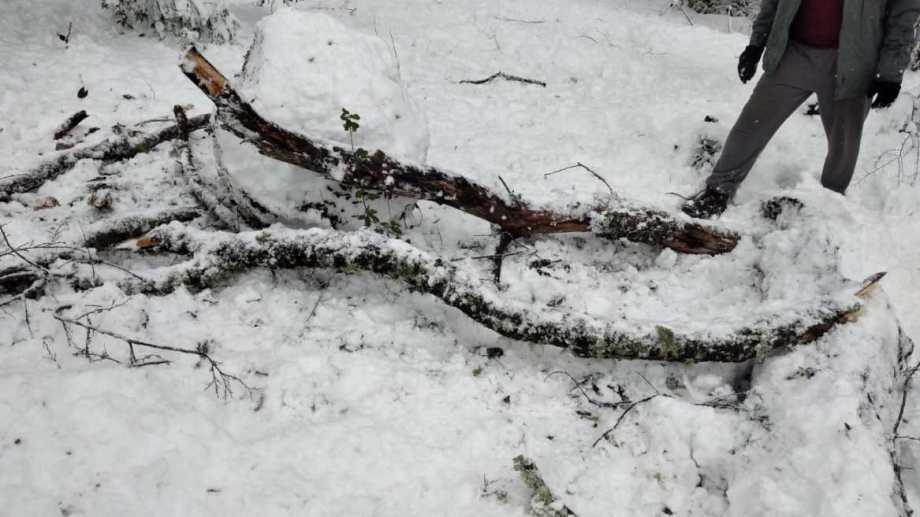 La rama cayó en el patio donde jugaban los niños. Foto: Realidad Sanmartinense