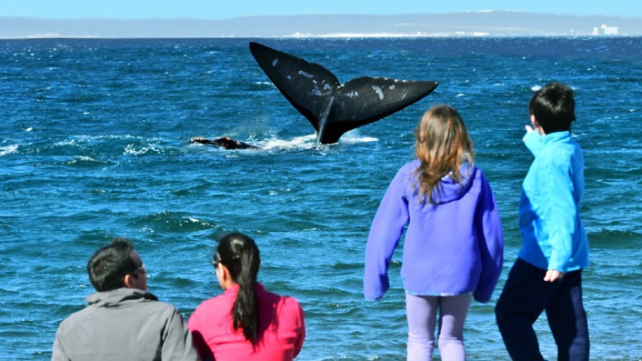 Maravilla. Las ballenas muy cerca de la costa en El Doradillo, a 15 km de Puerto Madryn, Chubut.