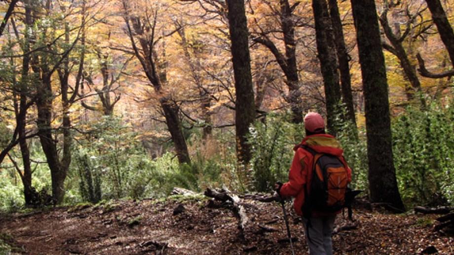 El Parque central tiene respaldo por ley y se pretende crear en tierras del Estado nacional en Bariloche. Foto: Municipalidad