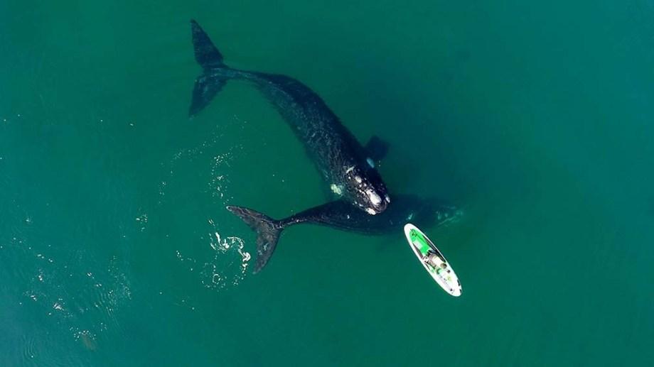 La primera vez. Encuentro de Analía con ballenas en la costa de Madryn el 31 de agosto. Esta semana volvió a suceder. Foto: Maxi Jonas.