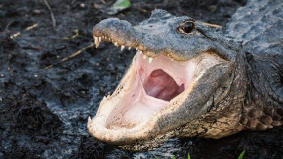 El cocodrilo medía más de tres metros y lo mataron cazadores.