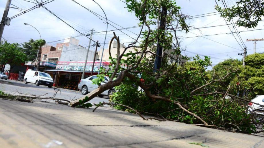 Árboles caídos y cortes de energía se multiplicaron en la provincia de Córdoba. (Gentileza La Voz del Interior)