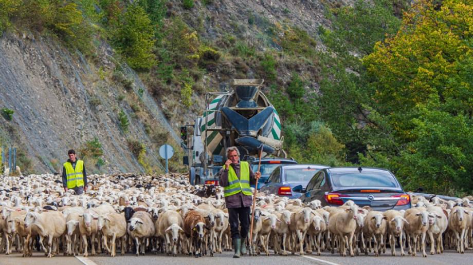 Arrieros en la ruta de los pirineos españoles. Foto: Ricardo Kleine Samson.