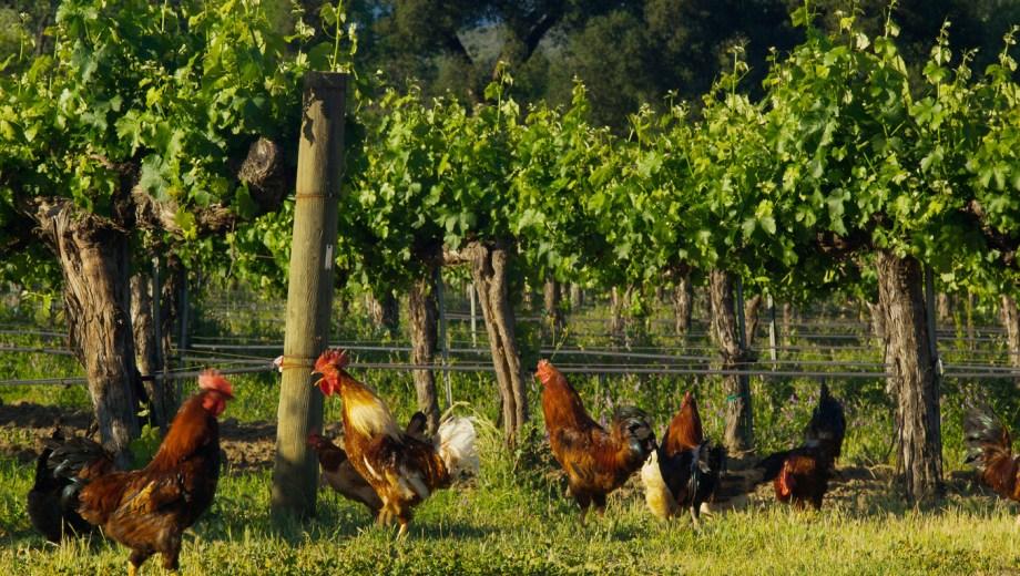Resultado de imagen para vitivinicultura organica